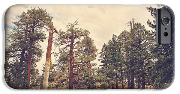 Tall Trees iPhone Cases - Still Proud iPhone Case by Laurie Search
