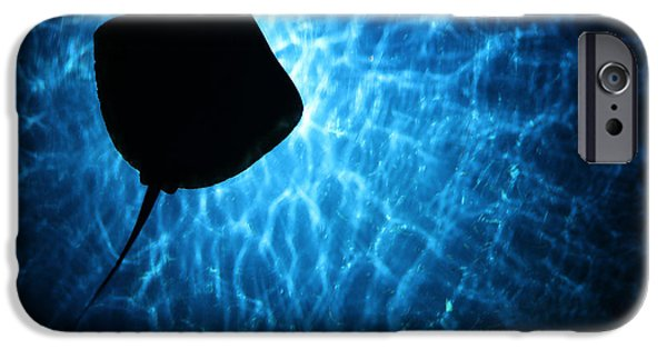 Underwater Photos iPhone Cases - Stingray Silhouette iPhone Case by Donna Corless