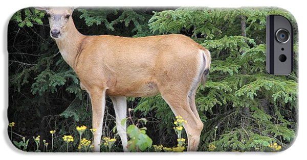 Creek Pyrography iPhone Cases - Stone Creek Deer iPhone Case by Erin Ross