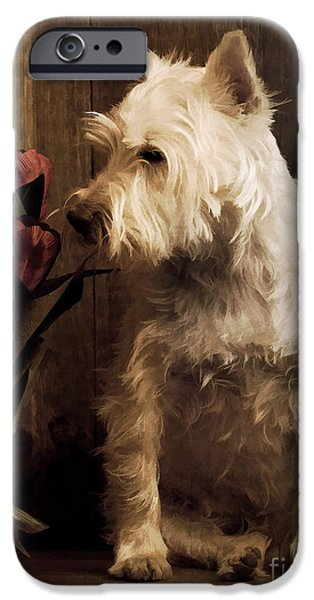 Stop and Smell the Flowers iPhone Case by Edward Fielding