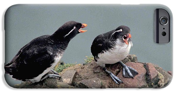 Auklets iPhone Cases - Stop Whining iPhone Case by F Hughes