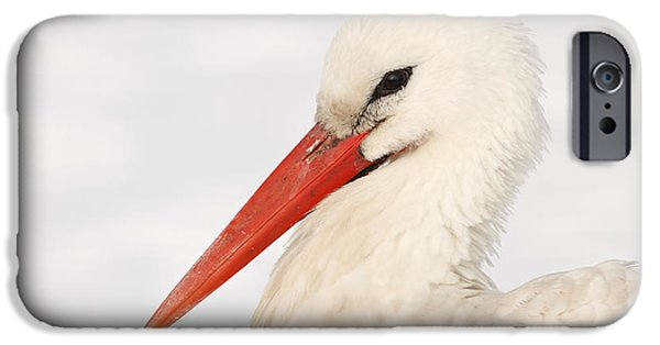 Red Eye iPhone Cases - Stork in the Snow iPhone Case by Roeselien Raimond