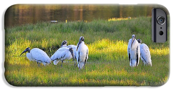 Stork iPhone Cases - Storks at Sundown iPhone Case by Al Powell Photography USA