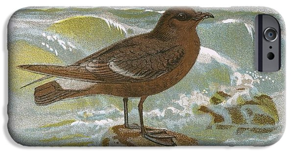 Storm iPhone Cases - Storm Petrel iPhone Case by English School