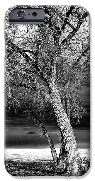 Winter Storm iPhone Cases - Storm Tree iPhone Case by Steven Reed
