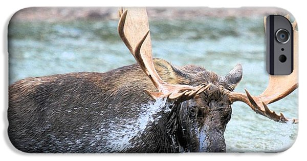 Moose In Water iPhone Cases - Stormy Dinner iPhone Case by Adam Jewell