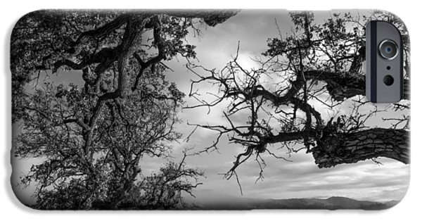 Resilience iPhone Cases - Stormy Oaks iPhone Case by Arnaldo Torres
