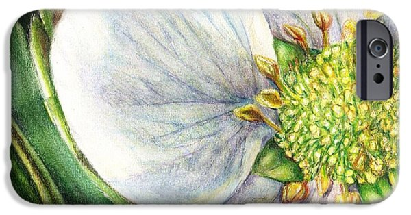 Macro Drawings iPhone Cases - Strawberry Blossom iPhone Case by Shana Rowe