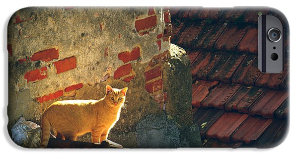 Stray iPhone Cases - Stray Cat iPhone Case by Carlos Caetano