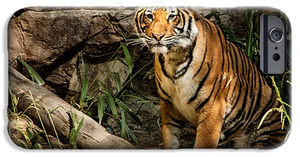 The Tiger iPhone Cases - Stray Cat iPhone Case by Jon Berghoff
