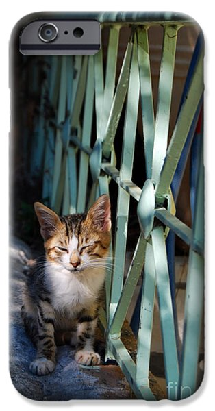 Stray iPhone Cases - Stray kitten iPhone Case by Antony McAulay
