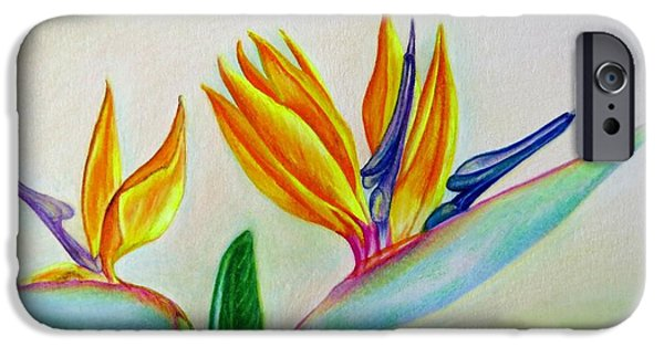 Flora Drawings iPhone Cases - Strelitzia - Together iPhone Case by Zina Stromberg