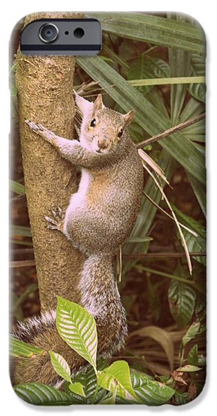 Fed iPhone Cases - Strike a Pose 2 iPhone Case by Laurie Perry