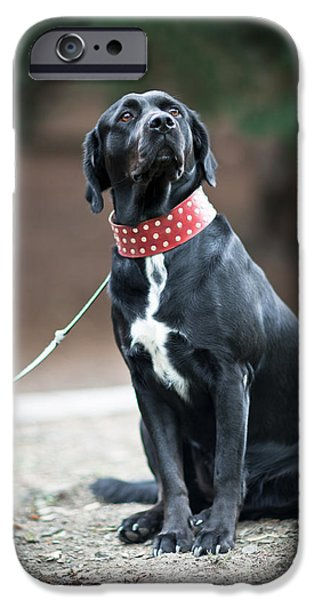 Dog In Landscape iPhone Cases - Strike a Pose iPhone Case by Charlie Photographer