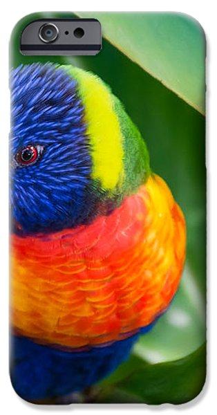 Striking Rainbow Lorakeet iPhone Case by Penny Lisowski