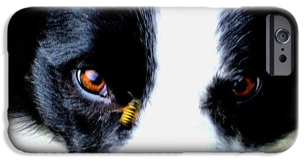 Dog Close-up Digital Art iPhone Cases - Striped Living Drone Alert iPhone Case by Aliceann Carlton