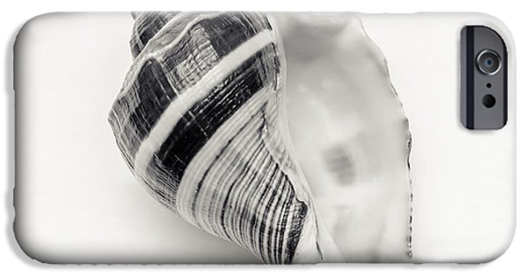 Beach Art iPhone Cases - Striped Sea Shell 2 iPhone Case by Lucid Mood