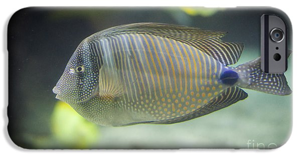 Alga iPhone Cases - Striped tropical fish Desjardini Tang iPhone Case by Shaun Wilkinson