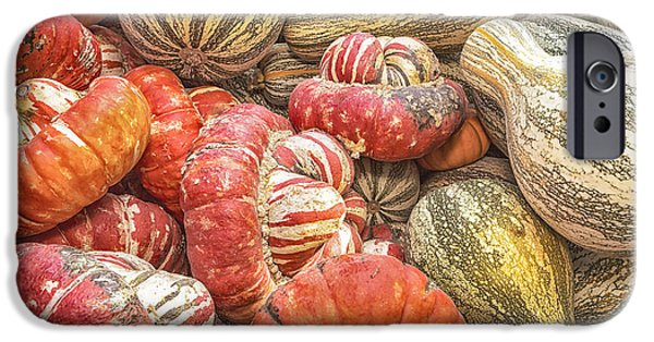 Farmstand iPhone Cases - Stripes iPhone Case by Caitlyn  Grasso