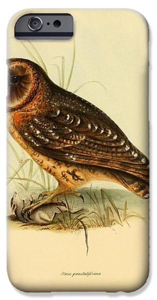 Business Paintings iPhone Cases - Strix Owl iPhone Case by Unknown Artist