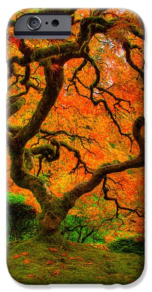 Lone Tree iPhone Cases - Structured Beauty iPhone Case by Dustin  LeFevre