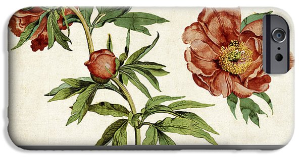 Botanic Illustration iPhone Cases - Studies Of Peonies, 1472 iPhone Case by Getty Research Institute