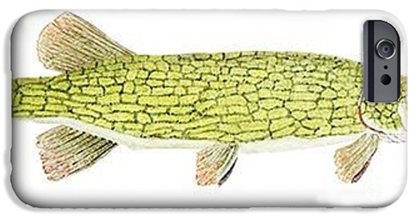 Muskie iPhone Cases - Study of a Chain Pickerel iPhone Case by Thom Glace