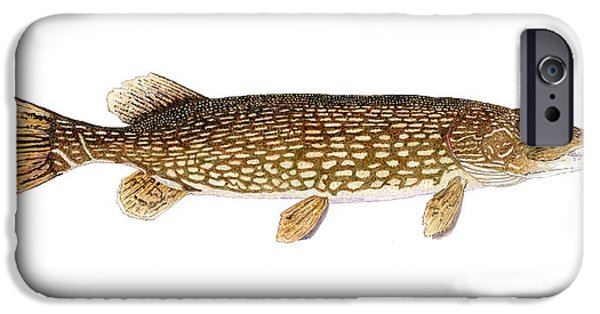 Muskie iPhone Cases - Study of a Northern Pike iPhone Case by Thom Glace