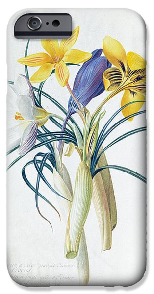 19th Century iPhone Cases - Study of Four Species of Crocus iPhone Case by Georg Dionysius Ehret