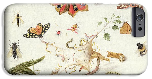 Creatures Paintings iPhone Cases - Study of Insects and Flowers iPhone Case by Ferdinand van Kessel
