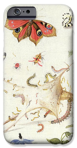 Study of Insects and Flowers iPhone Case by Ferdinand van Kessel