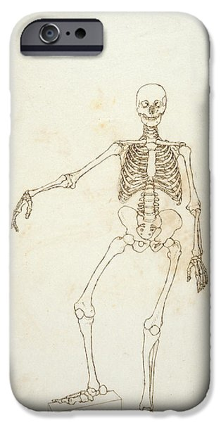 Proportions iPhone Cases - Study Of The Human Figure, Anterior View, From A Comparative Anatomical Exposition Of The Structure iPhone Case by George Stubbs