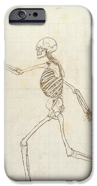 Proportions iPhone Cases - Study Of The Human Figure, Lateral View, From A Comparative Anatomical Exposition Of The Structure iPhone Case by George Stubbs