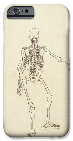 Proportions iPhone Cases - Study Of The Human Figure, Posterior View, From A Comparative Anatomical Exposition iPhone Case by George Stubbs