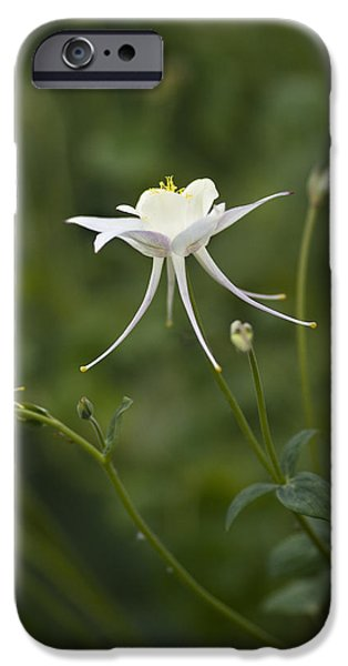 Columbine iPhone Cases - Stunner iPhone Case by Rebecca Cozart