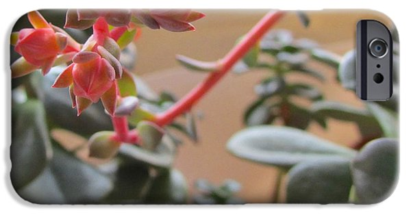 Flora iPhone Cases - Succulent Blossom iPhone Case by Brenda Pressnall
