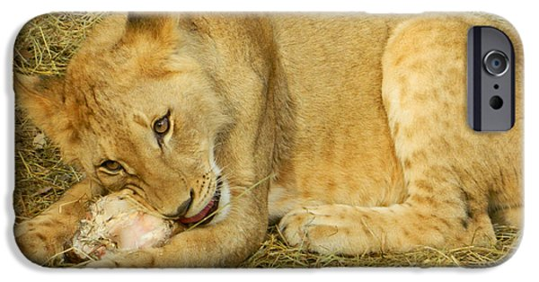 Smithsonian iPhone Cases - Succulent Bone Snack for Lion Cub iPhone Case by Emmy Marie Vickers