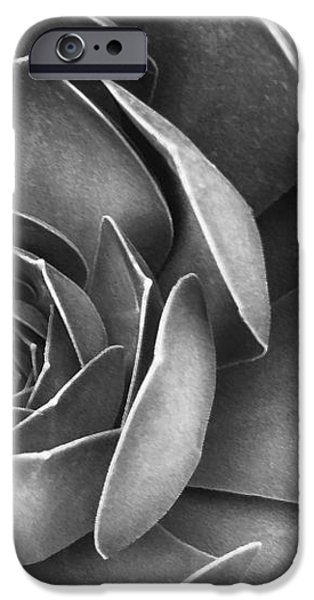 Succulent In Black And White iPhone Case by Ben and Raisa Gertsberg