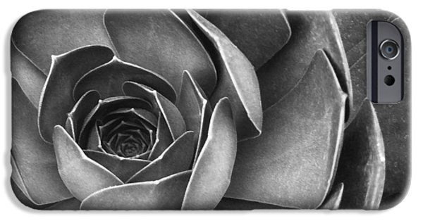 Best Sellers -  - Floral Digital Art Digital Art iPhone Cases - Succulent In Black And White iPhone Case by Ben and Raisa Gertsberg