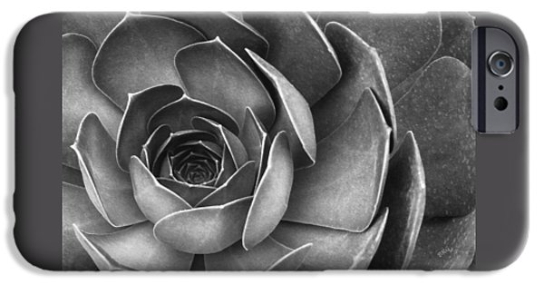 Brg iPhone Cases - Succulent In Black And White iPhone Case by Ben and Raisa Gertsberg
