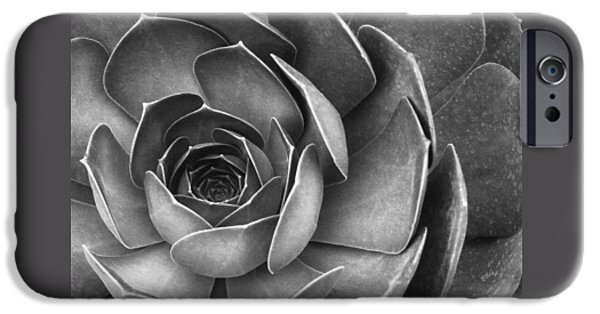 Gertsberg iPhone Cases - Succulent In Black And White iPhone Case by Ben and Raisa Gertsberg
