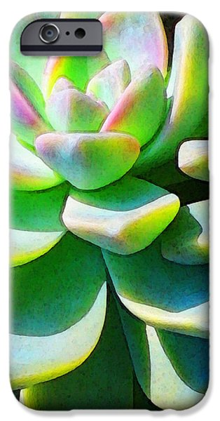 Business iPhone Cases - Succulent - Plant Art By Sharon Cummings iPhone Case by Sharon Cummings