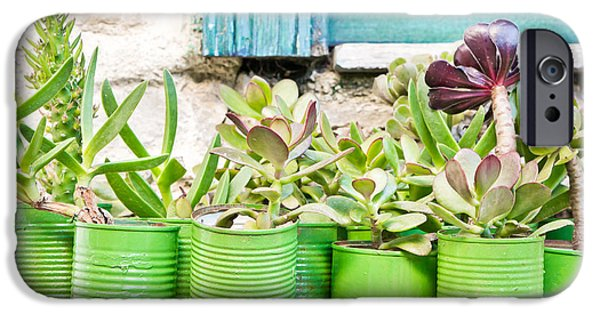 Ledge Photographs iPhone Cases - Succulent plants iPhone Case by Tom Gowanlock