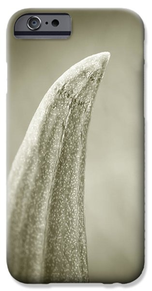 Toning iPhone Cases - Succulent iPhone Case by Wim Lanclus