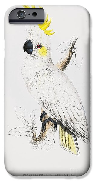 Fauna Drawings iPhone Cases - Sulfur -Crested Cockatoo iPhone Case by Pg Reproductions