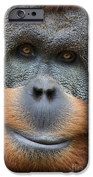 Orangutan Digital Art iPhone Cases - Sumatra Orangutan iPhone Case by Jerry Fornarotto