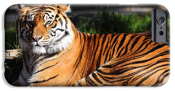 Eye Of The Tiger iPhone Cases - Sumatran Tiger 5D27142 iPhone Case by Wingsdomain Art and Photography