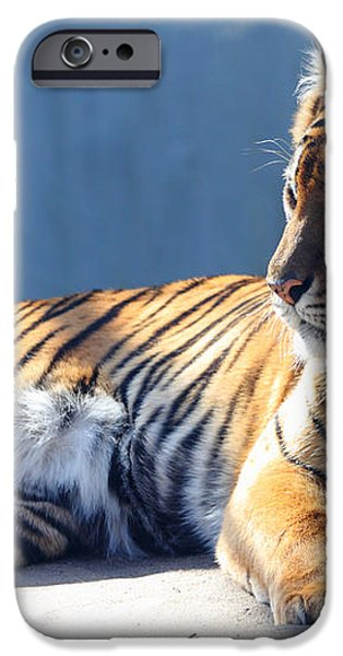Sumatran Tiger 7D27276 iPhone Case by Wingsdomain Art and Photography