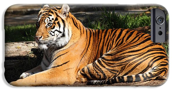Eye Of The Tiger iPhone Cases - Sumatran Tiger 7D27310 iPhone Case by Wingsdomain Art and Photography