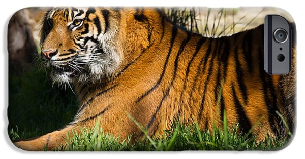 Eye Of The Tiger iPhone Cases - Sumatran Tiger 7D9084 iPhone Case by Wingsdomain Art and Photography